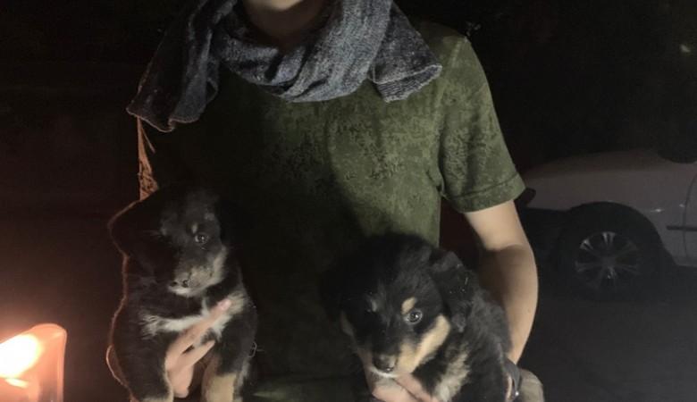 В Новосибирске парень спас пятерых щенков из дома, который мог рухнуть в любой момент