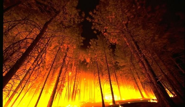 Режим ЧС из-за лесных пожаров введён в Иркутской области