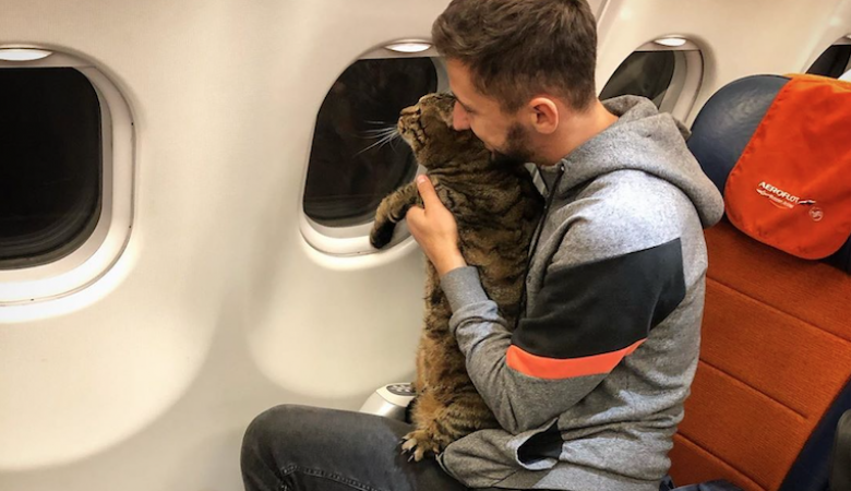 Минтранс не стал менять правила перевозки животных после случая с котом Виктором
