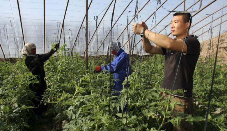 Китайцы арендовали более 100 тыс. га земли в Забайкальском крае