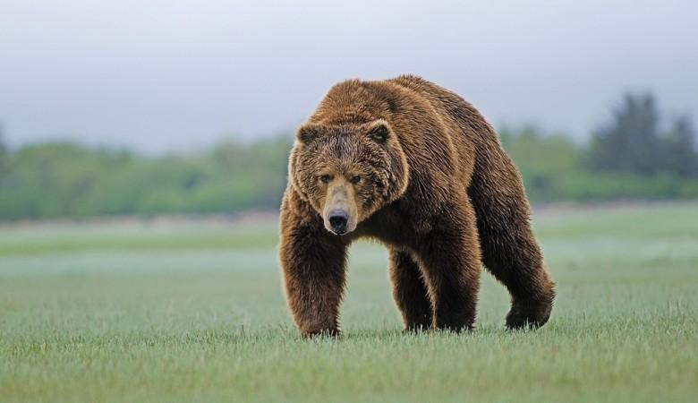 Житель Томской области оказался в больнице после нападения медведя