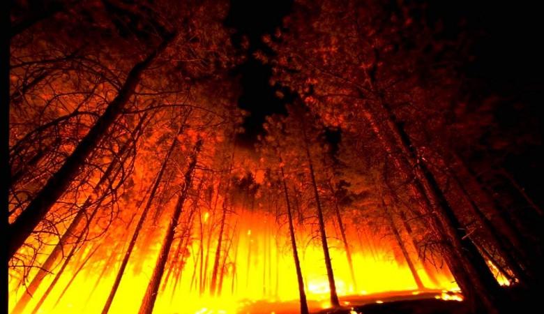 Полтора десятка лесных пожаров действует вБурятии