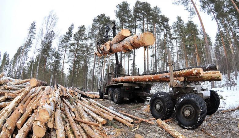 Путин поручил проверить факты незаконной вырубки леса в Омской области
