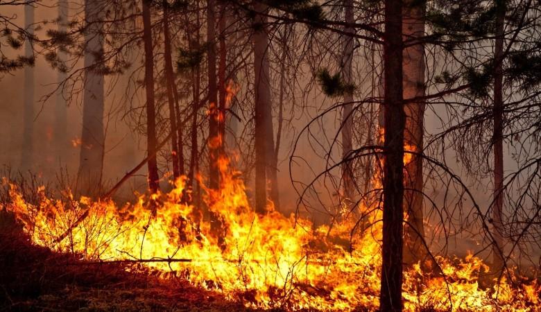 В Томской области введен режим ЧС из-за множественных пожаров