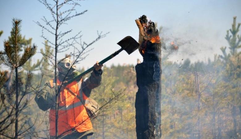 ВЗабайкалье наданный момент полыхает больше 250 гектаров леса