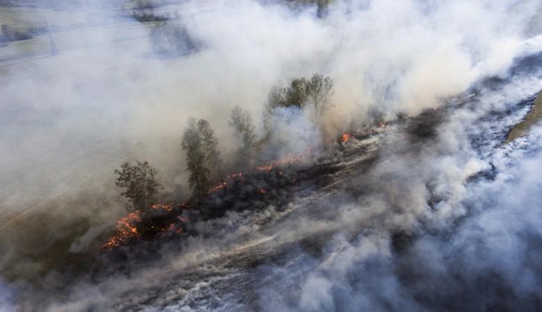 За выходные в Красноярском крае ликвидированы 82 лесных пожара
