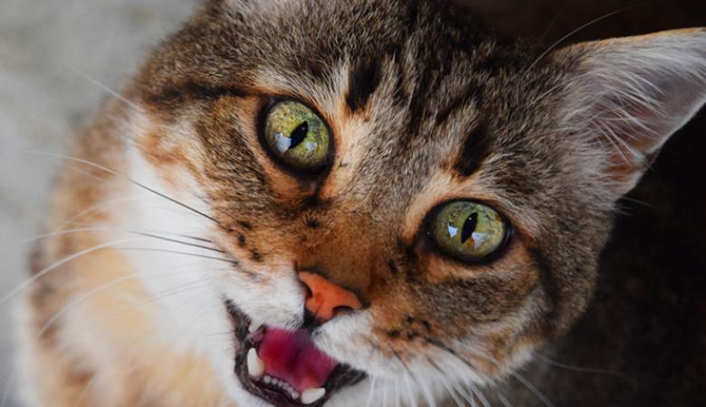 СК в Красноярске проверяет видео, на котором подростки «запекают» кошку в духовке
