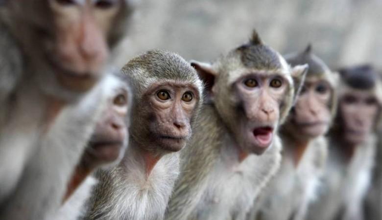 Красноярским обезьянам впервые показали снег (ВИДЕО)