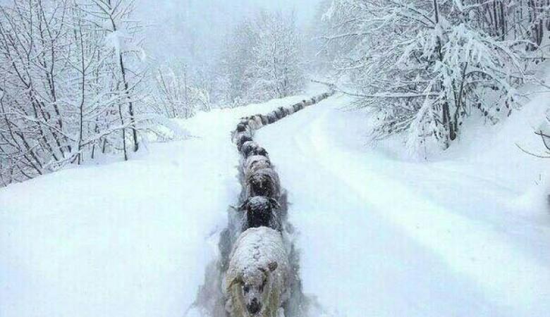 Практически 150 человек участвовали врасчистке дорог после снегопада вТуве