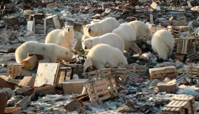 Военные вывезут из Арктики 750 тонн мусора