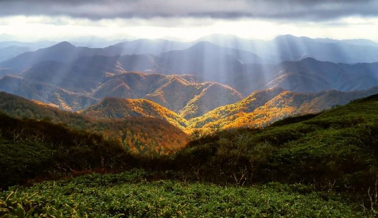 На Алтае суд вернул в госсобственность 168 млн кв. м леса, незаконно проданные чиновниками