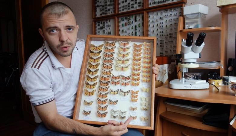 Несколько краснокнижных бабочек поймал этим летом кемеровский ученый