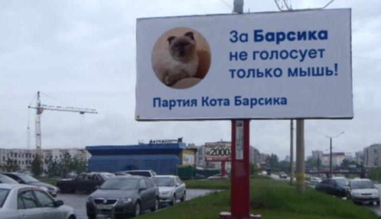 Алтайский кот Барсик предложил свои услуги американскому городу, где умер кот-мэр