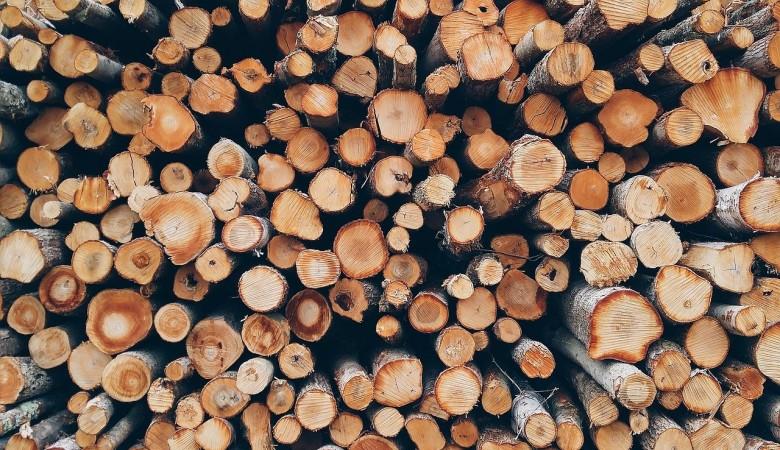 Бывший депутат Красноярского края незаконно вырубил лес на сумму 7,2 млн руб