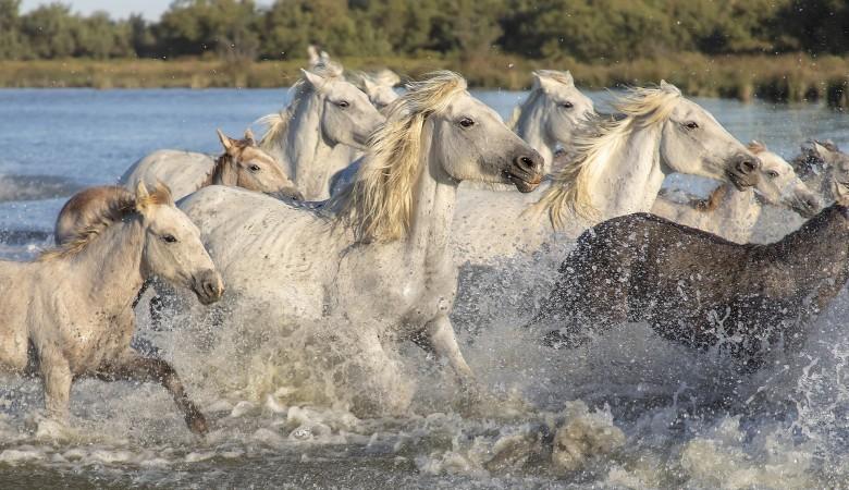 Трёх тувинцев осудят за кражу 22 лошадей в Республике Алтай