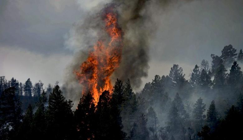 Крупный природный пожар локализован в Красноярском крае