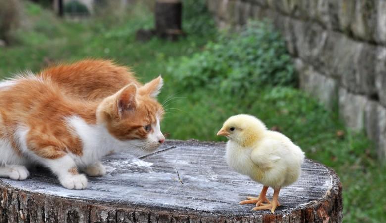 Жителя Омской области подозревают вубийстве при детях 16 цыплят икошки