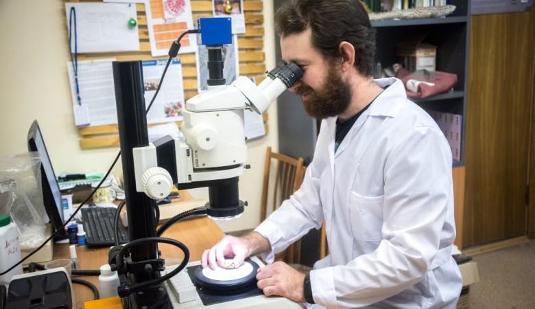 Томские палеонтологи установили возраст первого найденного в России яйца динозавра