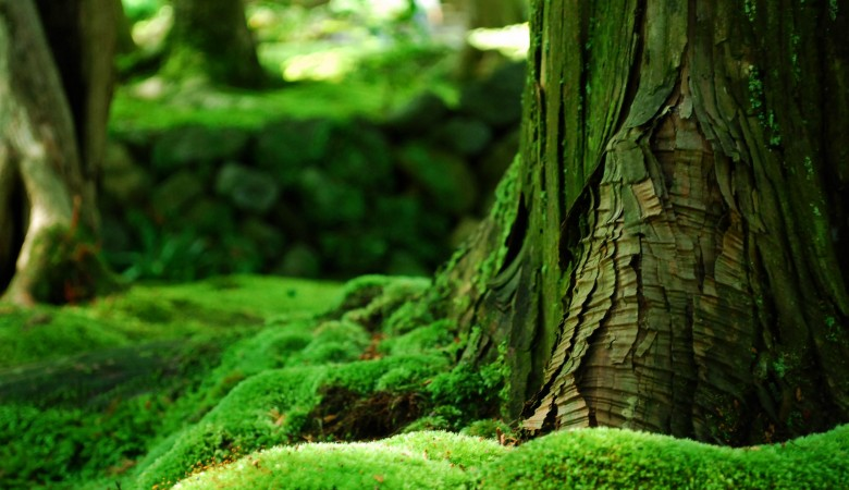 Власти Китая к 2020 году планируют высадить около 73 млн гектаров лесов
