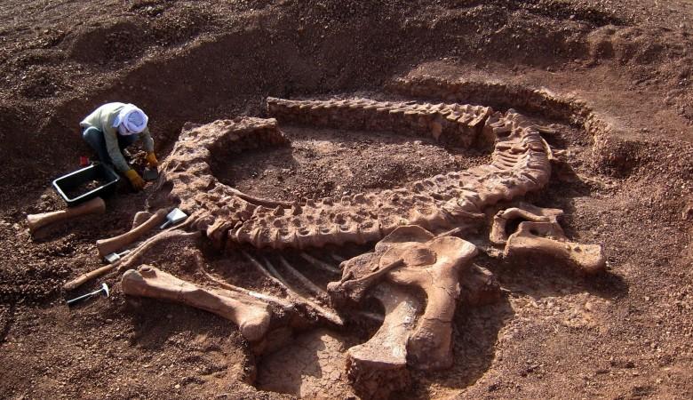 В Красноярском крае найдено крупное и очень древнее местонахождение динозавров и мамонтов