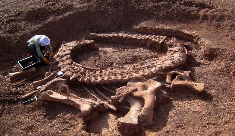 В Китае обнаружены следы динозавров возрастом более 145 млн лет