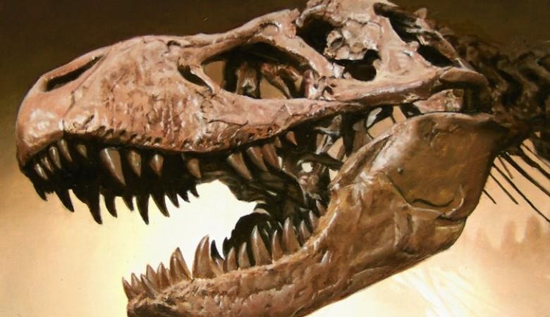 В Монголии украли череп динозавра