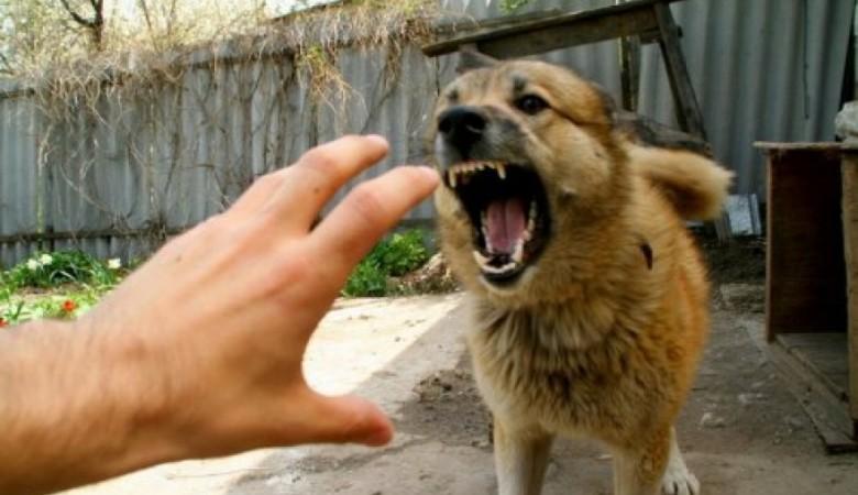 В Бурятии сторожевые псы загрызли работника из Китая
