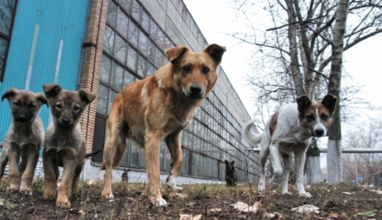 На кладбище в Абакане собаки разрывают могилы