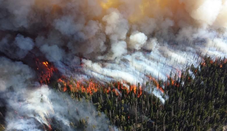 В Туве площадь сгоревших за сезон лесов снизилась на 57%