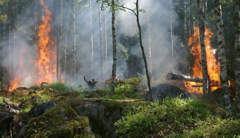 Иркутская область оказалась на последнем месте экорейтинга из-за пожаров и паводков