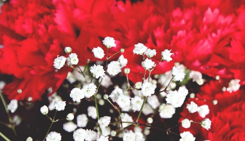 В Барнауле грабитель-неудачник вынес из киоска 48 гвоздик, перепутав их с розами