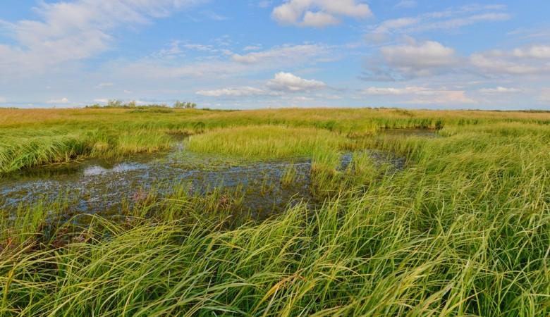 Ученые предлагают в сибирской Арктике создавать зеленые оазисы