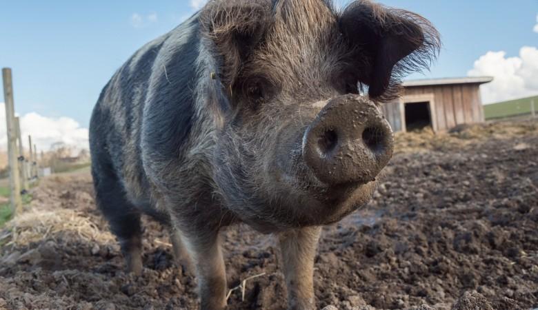 Под Томском найдена свалка 12 га со свиным навозом и куриным пометом