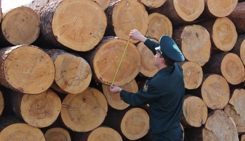 В Бурятии выявили контрабанду леса