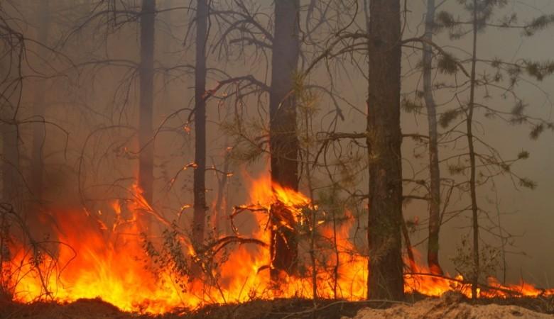 Все лесные пожары потушили в Бурятии