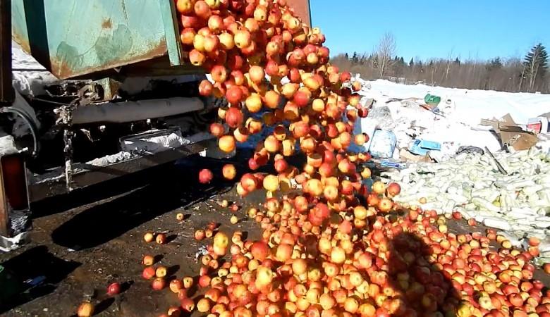 В Красноярске бульдозером раздавили почти 400 кг польских яблок