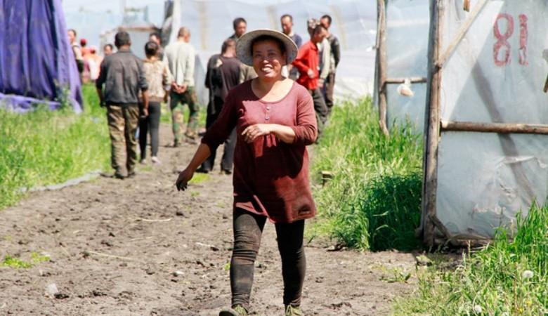 Китайцы готовы загаживать целину в Забайкальском крае на сотнях тысяч гектарах