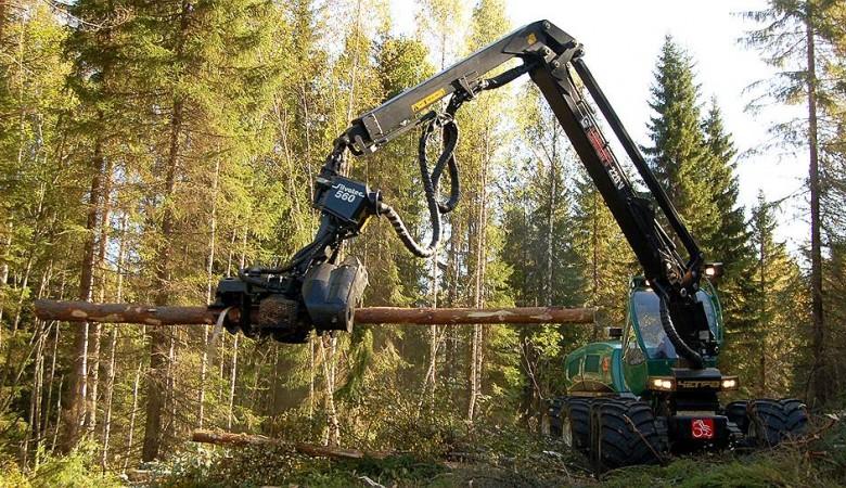 Власти Иркутской области берутся за места отгрузки леса – их станет меньше
