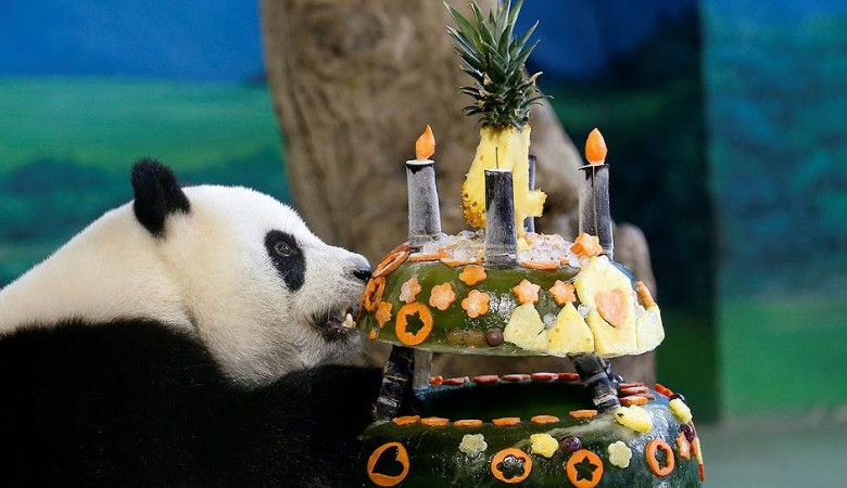 Скончалась старейшая панда вмире
