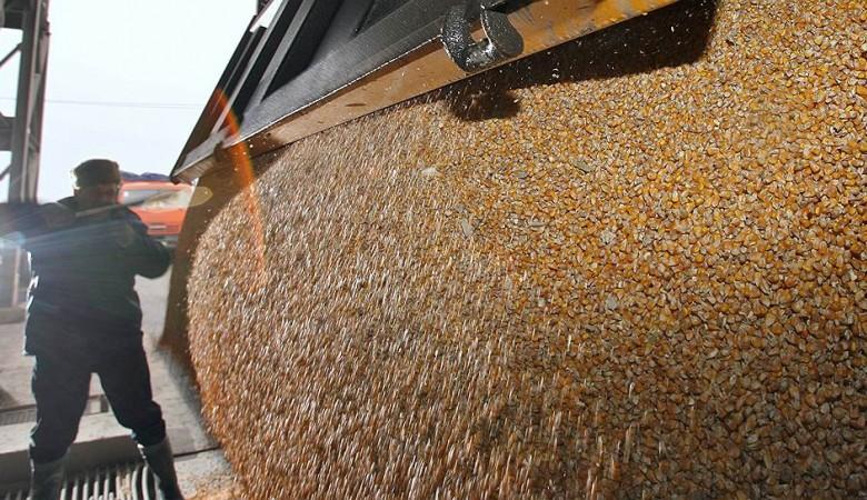 Первая партия пшеницы из Новосибирской области отправится на экспорт в Китай в октябре
