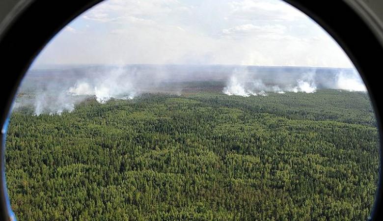 Количество лесных пожаров вКрасноярском крае уменьшилось практически втрое