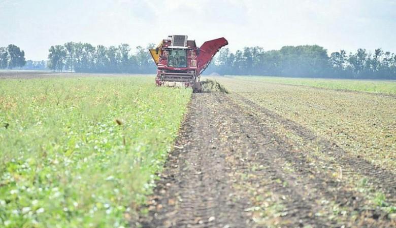 Алтайские аграрии собрали около 100 тыс. тонн сахарной свеклы