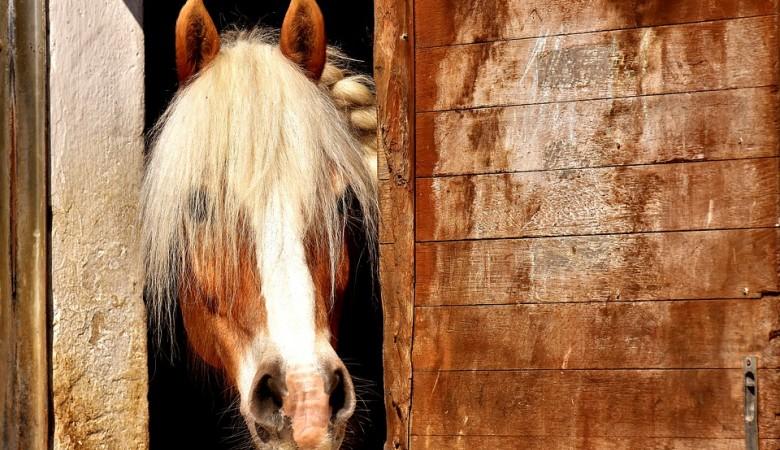 Пьяный омский предпенсионер верхом на коне задавал любовницу на ягодном поле