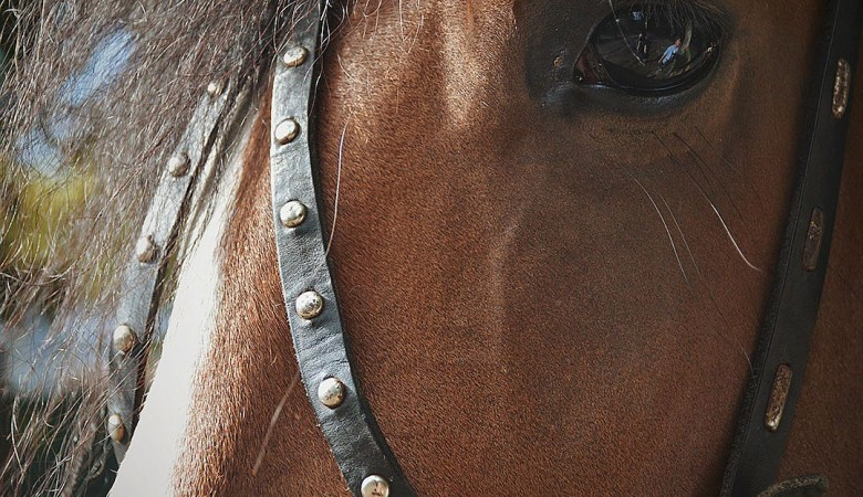 Владелец конного клуба