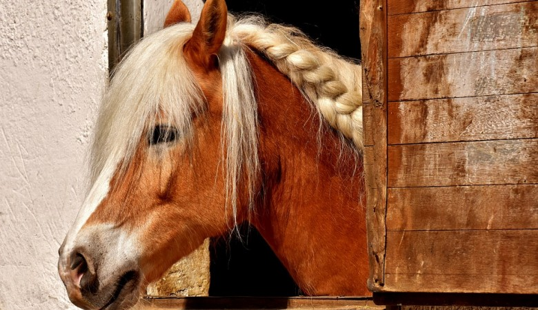В Томской области конь покусал ребенка