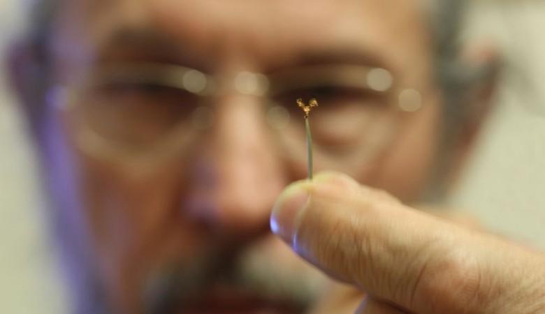 Омский микроминиатюрист создал золотого петуха