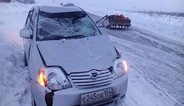Конь примерз подковами к трассе и попал в аварию в Новосибирской области