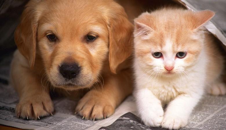 Пес и кот в Новосибирской области сдали приставам хозяина-должника