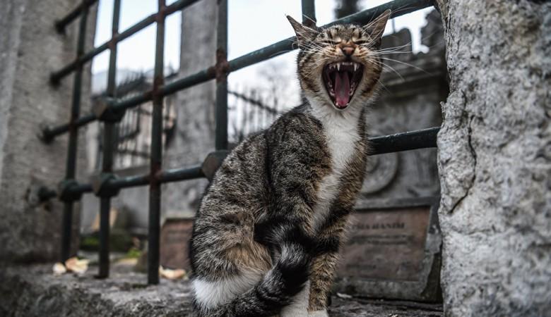 В Омске кошки почти месяц ели тело умершего хозяина