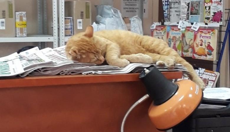 На омской почте работают коты